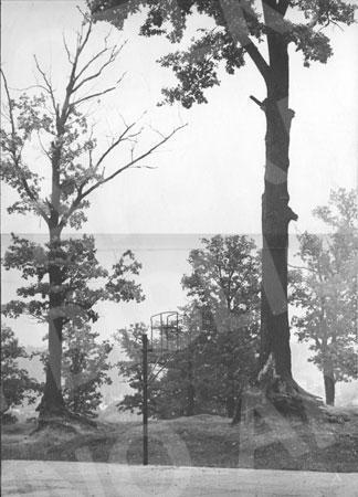 Aukštųjų Šančių ąžuolyno parkas