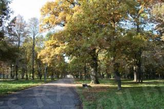Žaliakalnio ąžuolyno parkas. 2009 m.